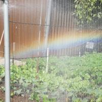 Garden Rainbow